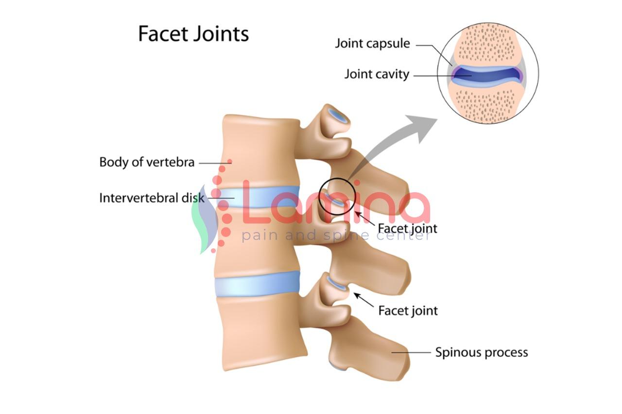 Facet joint adalah
