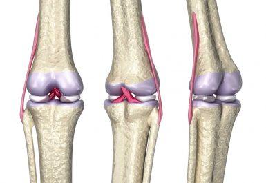 Struktur jaringan sendi lutut manusia