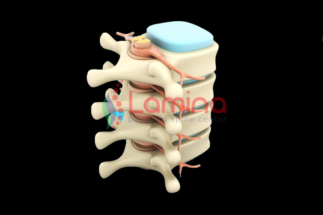 saraf dan tulang belakang perlu gizi yang cukup